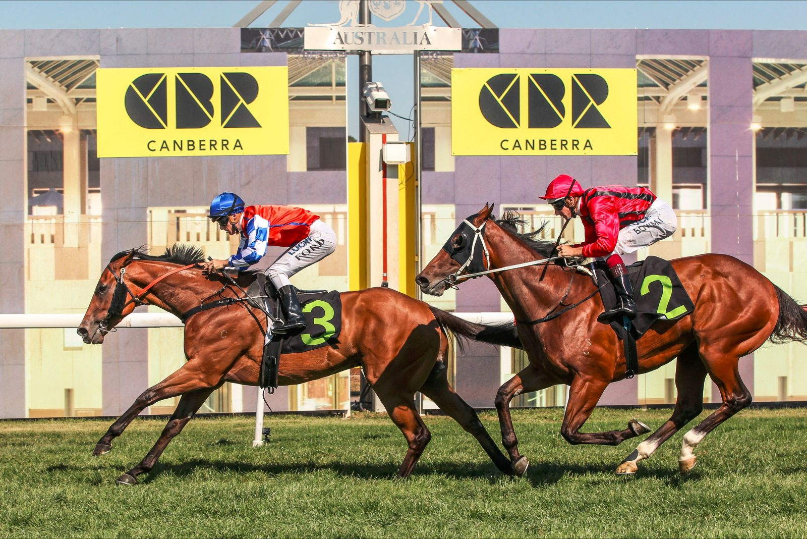 Horses race to the finish line