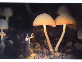 Photograph of Mushrooms with a small girl holding a lantern