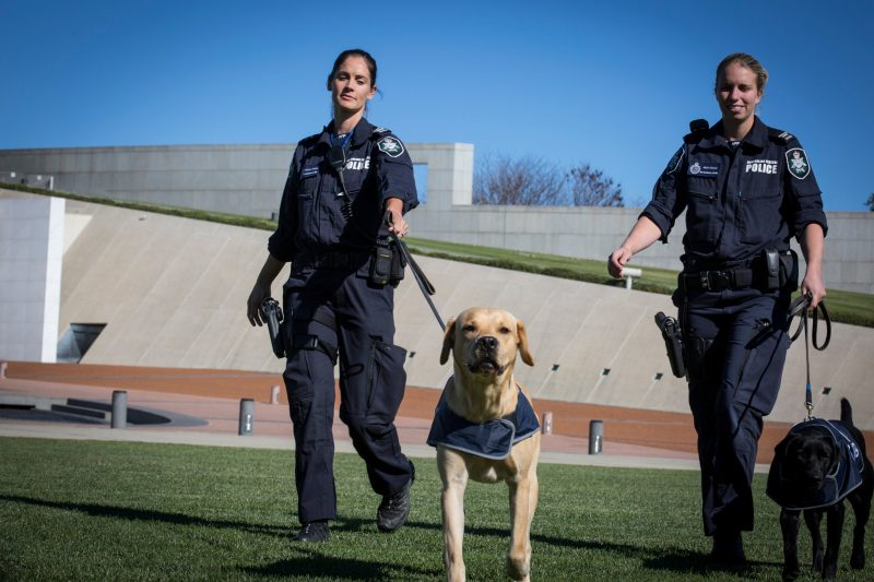 Two female police officers walk a golden labrador and a black labrador outside Parliament House.