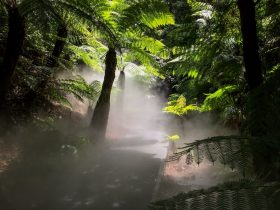 Mist in rainforest