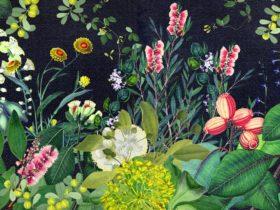 Flora and fauna on dark background
