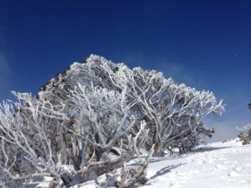 Blues skies at the Snowy Mountains during winter