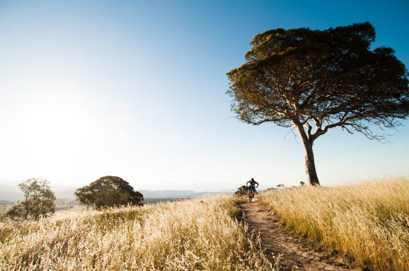 Centenary Trail. Photo by Damian Breach