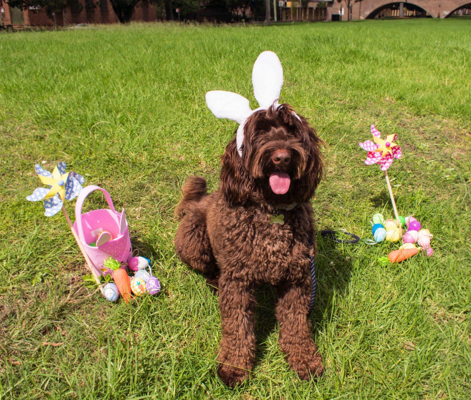 Canberra Easter Egg Hunt for Dogs