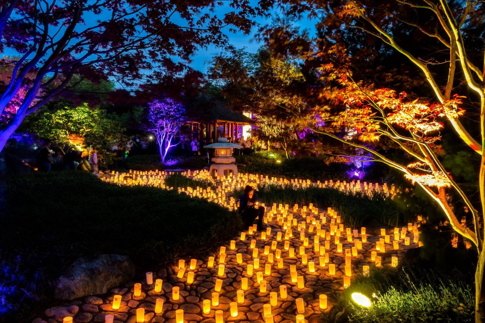 Shimmering paths of candles light up the Canberra Nara Peace Park.