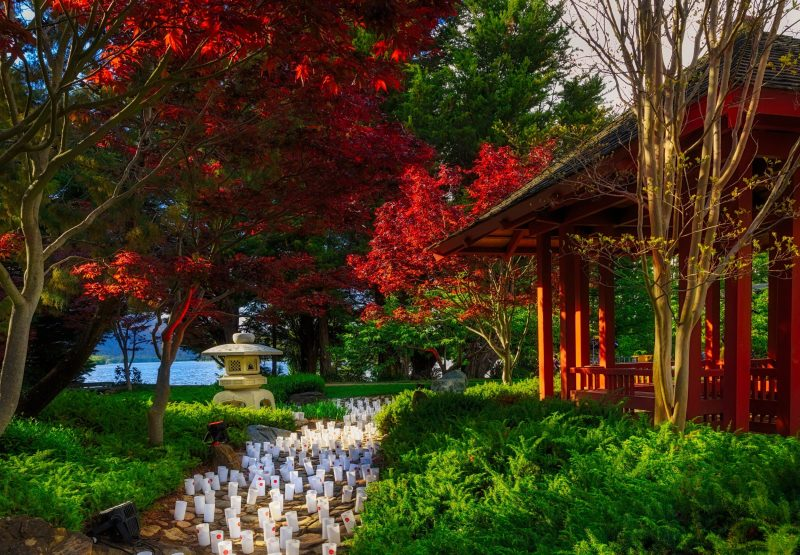 The vibrant colours of the Canberra Nara Peace Park, with the candles in position ready to be lit.