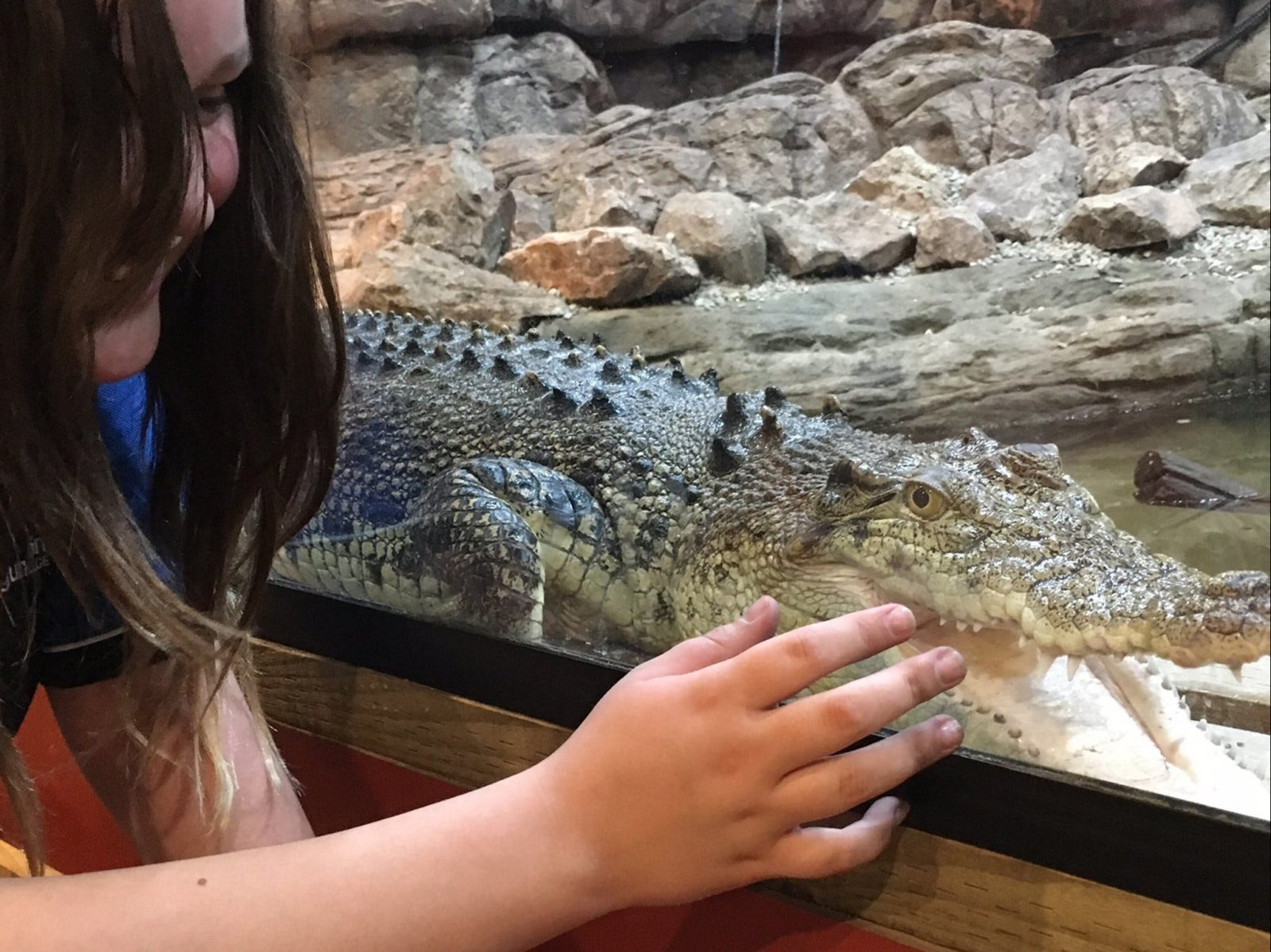 Girl looking at a baby crocodile behind the glass