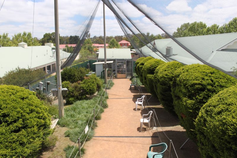 View inside the Canberra Walk in Aviary