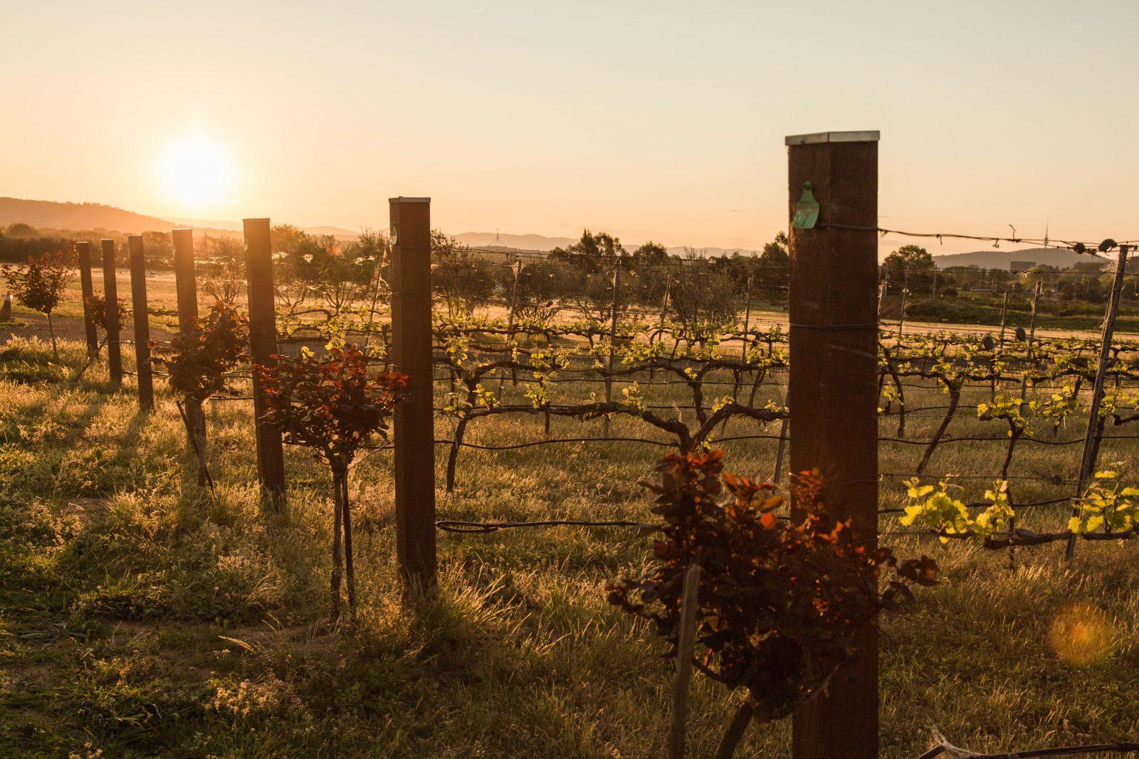 Pialligo Estate Winery