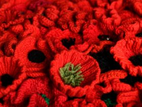 A series of knitted red poppies