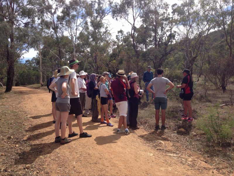 Tour group learning about bush tucker with an Aboriginal Guide