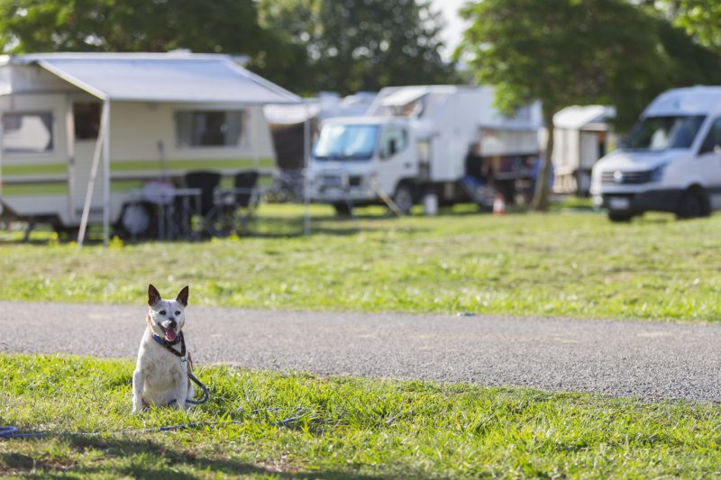 Dog sitting among campervans