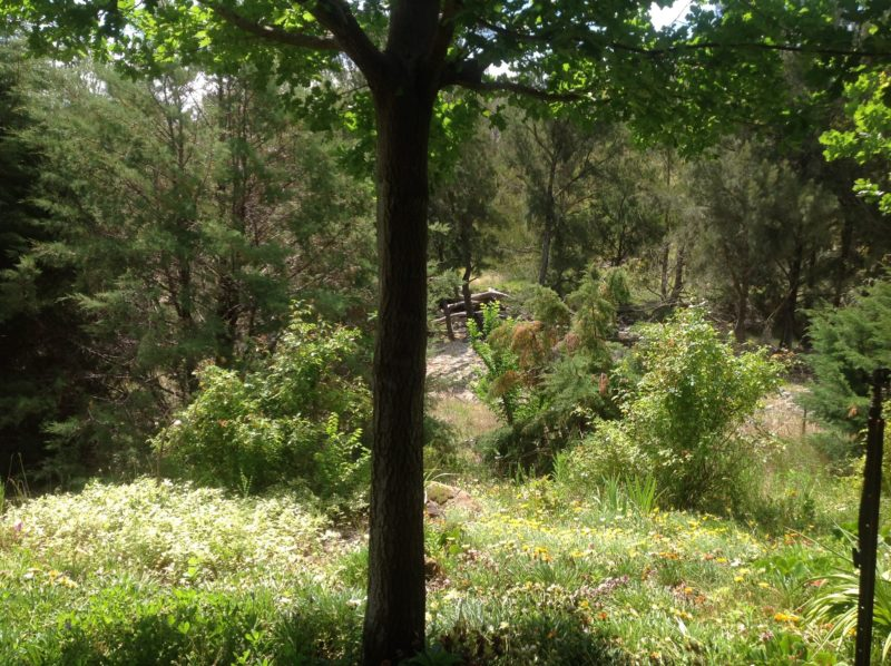 Garden views of the creek