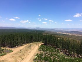 Dirt road running through Kowen Pine Forest with views to the countryside and far hills