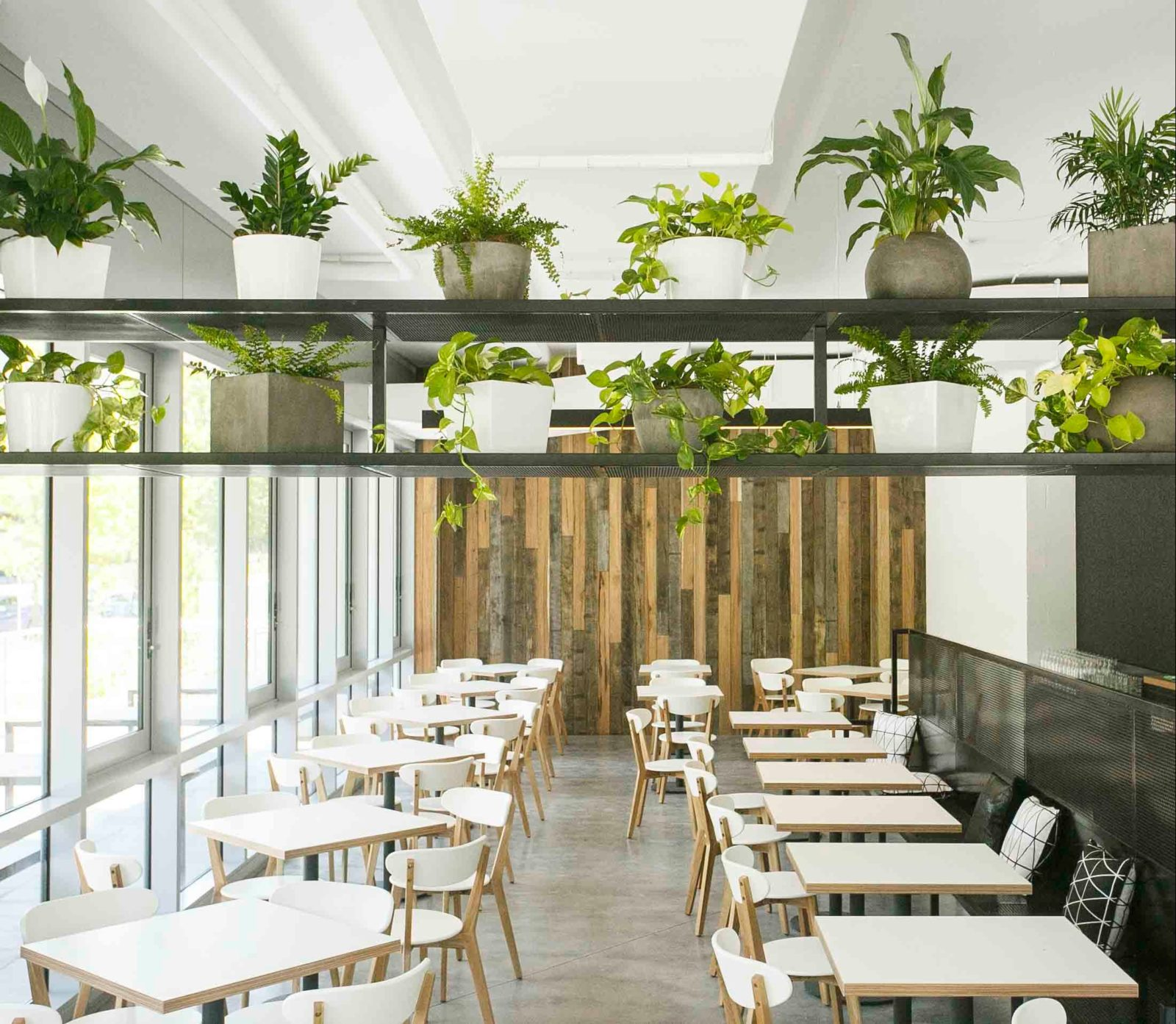 Light and airy cafe interior