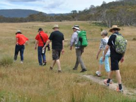 Five tourists and their guide walk through a grassland to a rock shelter at Yankee Hat