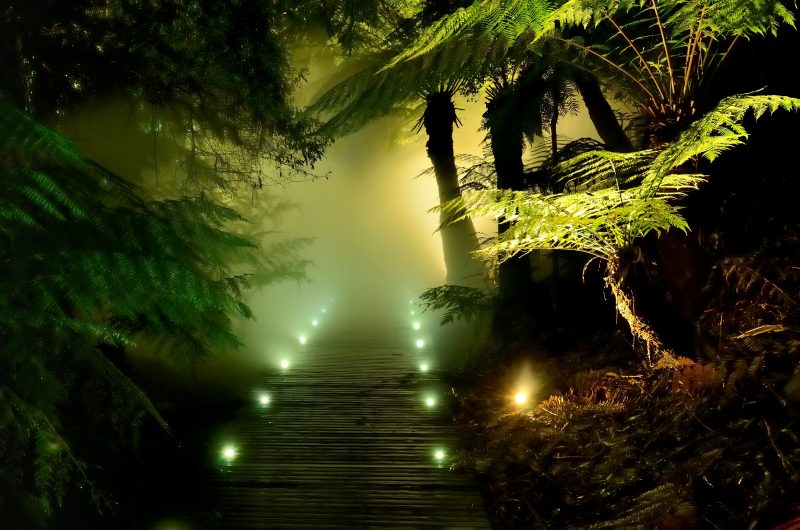 Misty rainforest boardwalk lit at night