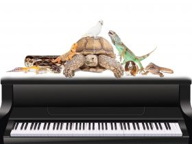 a program of classical favourites including Saint-Saëns' delightfully witty Carnival of the Animals.