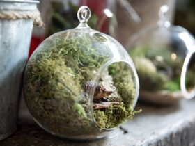 Custom made terrariums