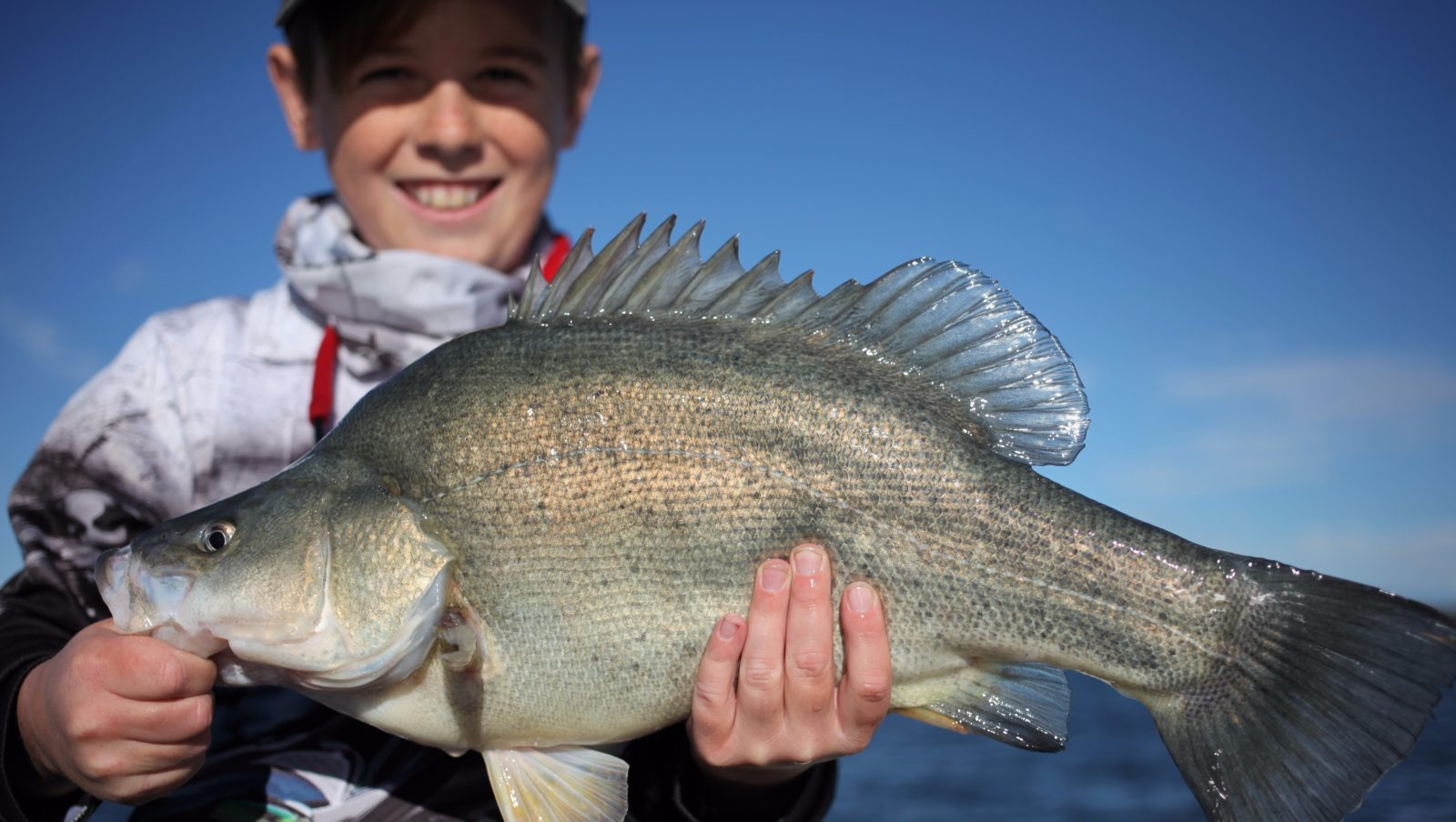 A lovely Golden Perch from Lake Burley Griffin just prior to release