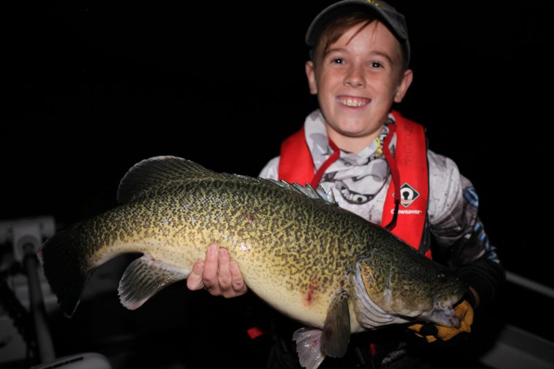 Lure crunching Murray Cod from Lake Burrinjuck