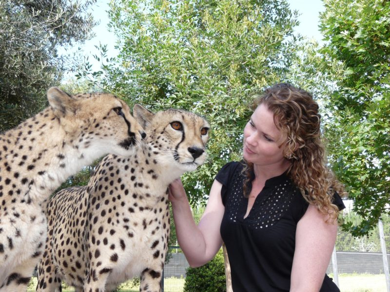 Lady patting a Cheetah