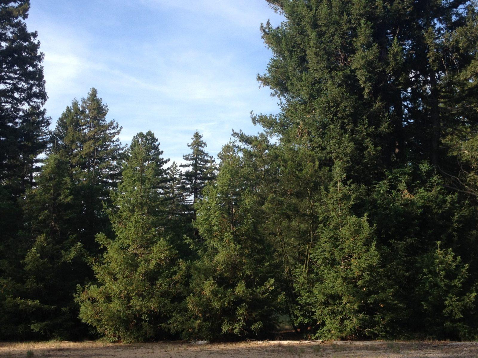 Pialligo Redwood Forest