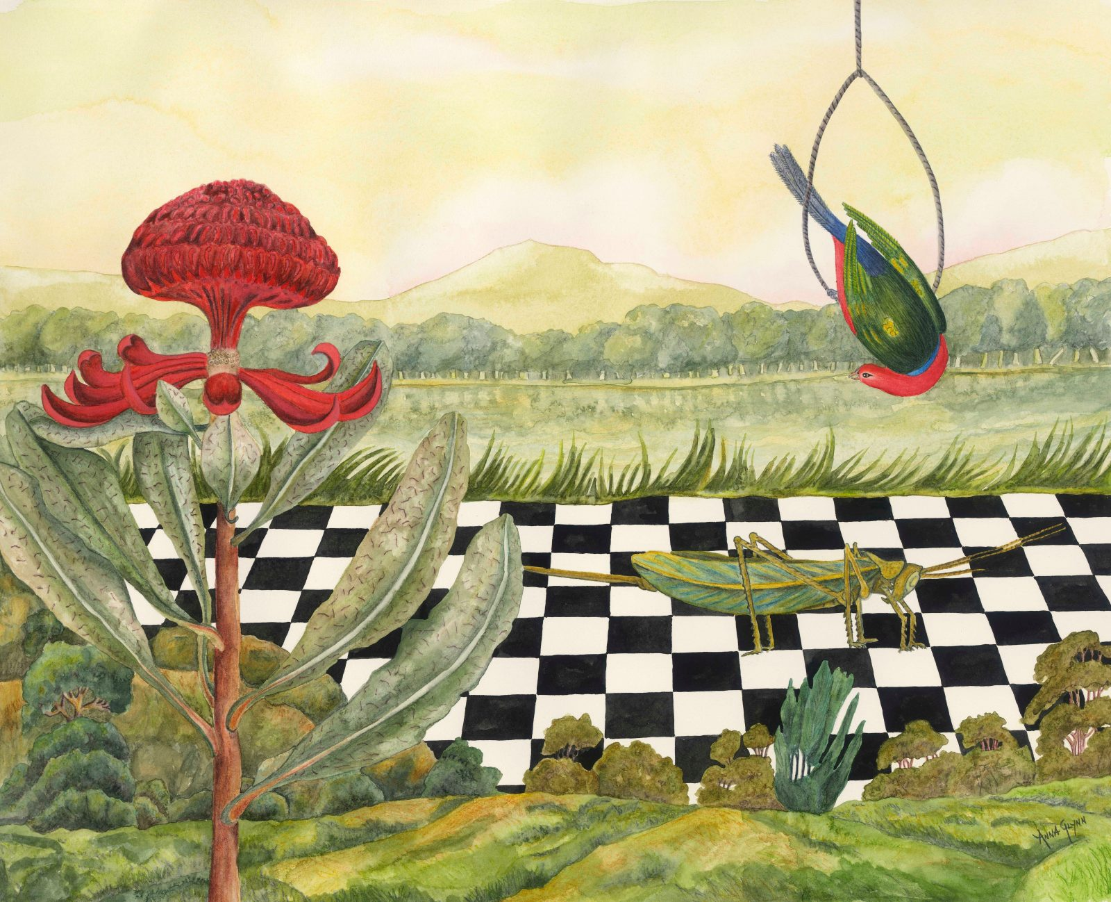 A painting of a Rosella, waratah and grasshopper
