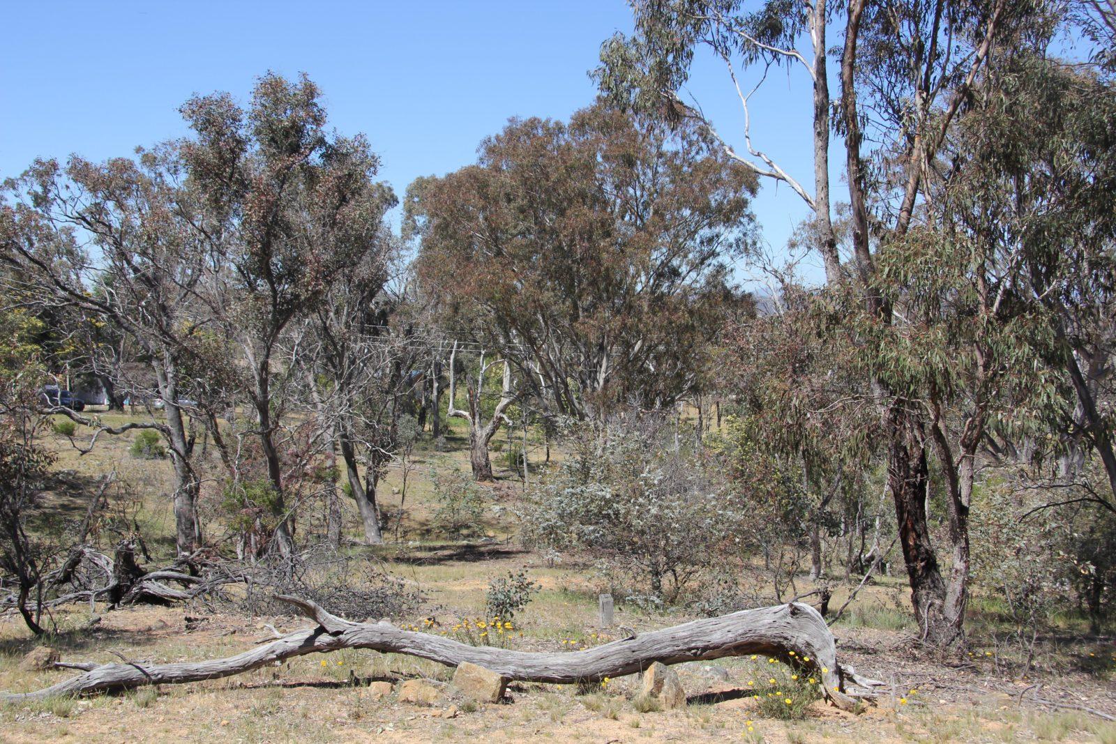 Remembrance Nature Park