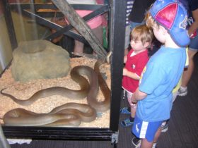 Two boys looking at snakes in an enclosure