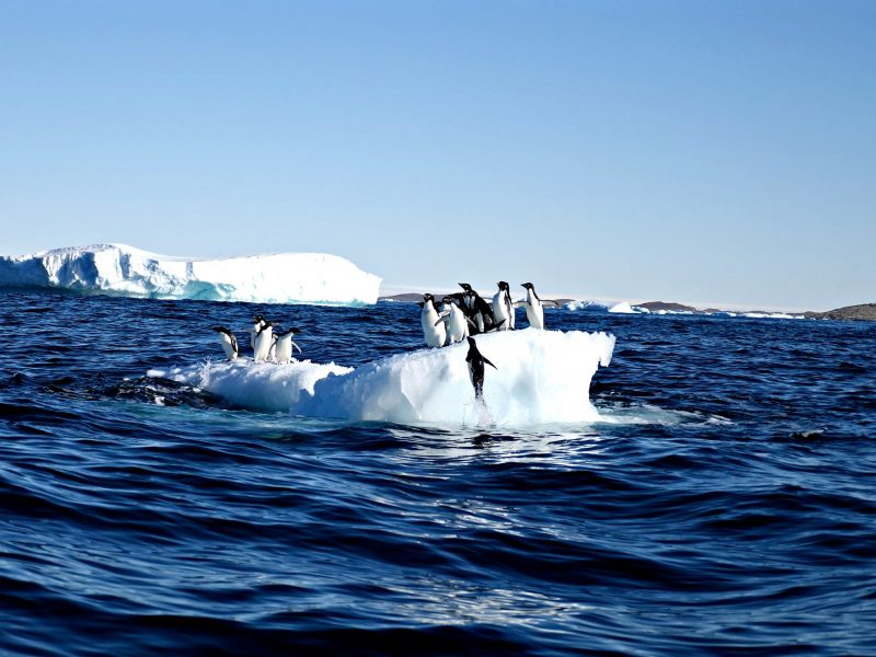 Several penguins on a floating ice berg
