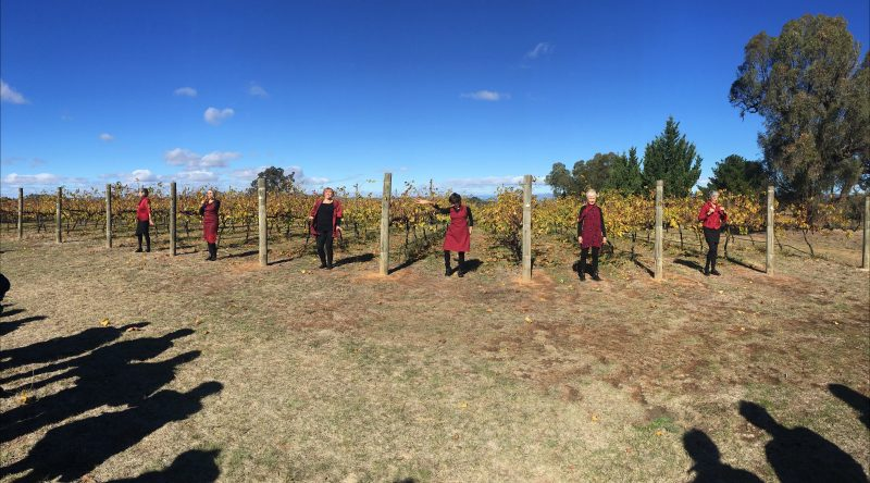 Canberra ensemble Somebody's Aunt perform JUICE at McKellar Ridge Winery