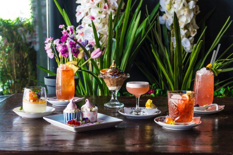 Top Cocktail Picks