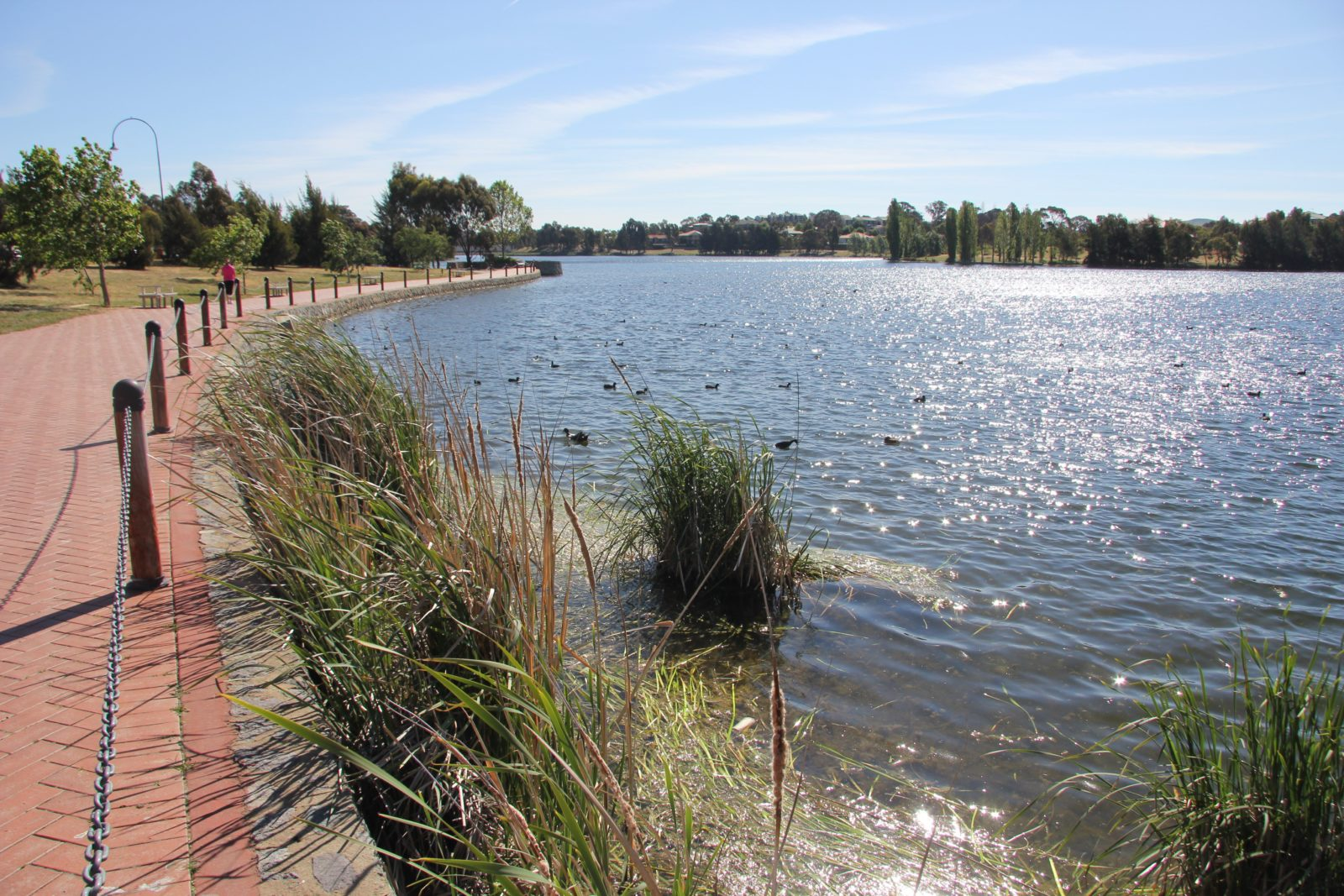 Path around Yerrabi Pond
