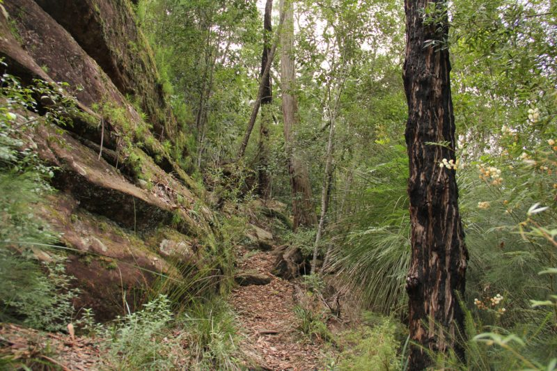 11km walking track, Dharug National Park. Photo: John Yurasek