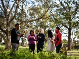 Aboriginal Heritage Tour