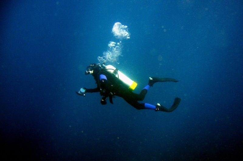 Pro dive tour Lord Howe Island