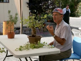 Discussing what makes a great bonsai