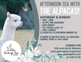 Afternoon Tea with the Alpacas