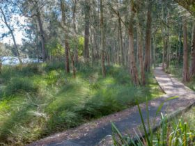 Anabranch Loop Track, Corramy Regional Park. Photo: Michael van Ewijk