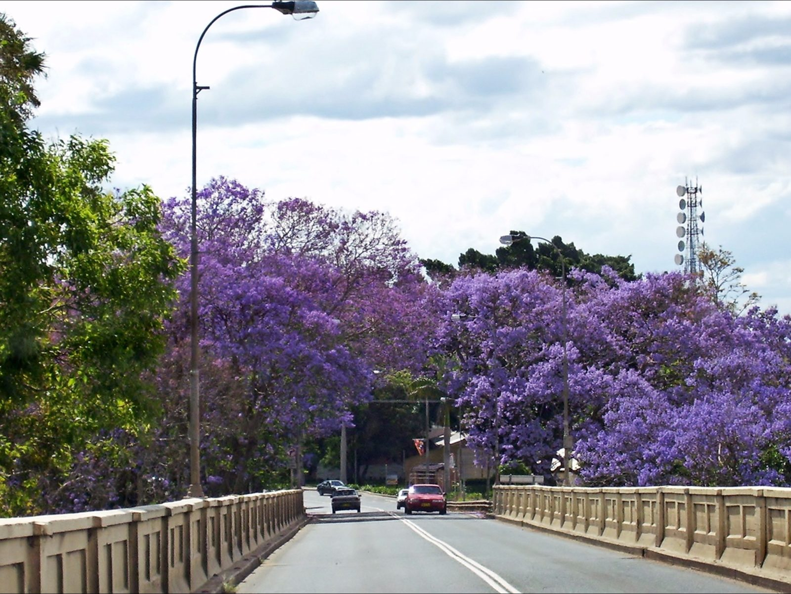 Grafton bridge Jacaranda time