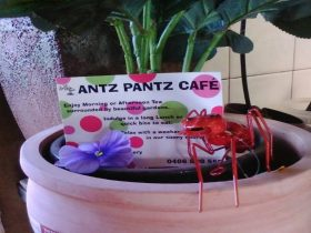 Antz Pantz Cafe in Golden Glance Nursery Young Hilltops Region NSW 2594