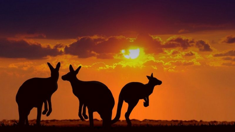 Outback with Kangaroos at sunset