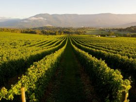 Scenic view of Mudgee vineyards