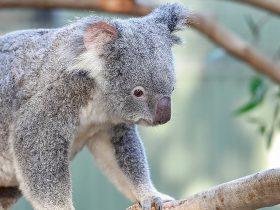 Wake up with the wildlife Aus Day Blacktown