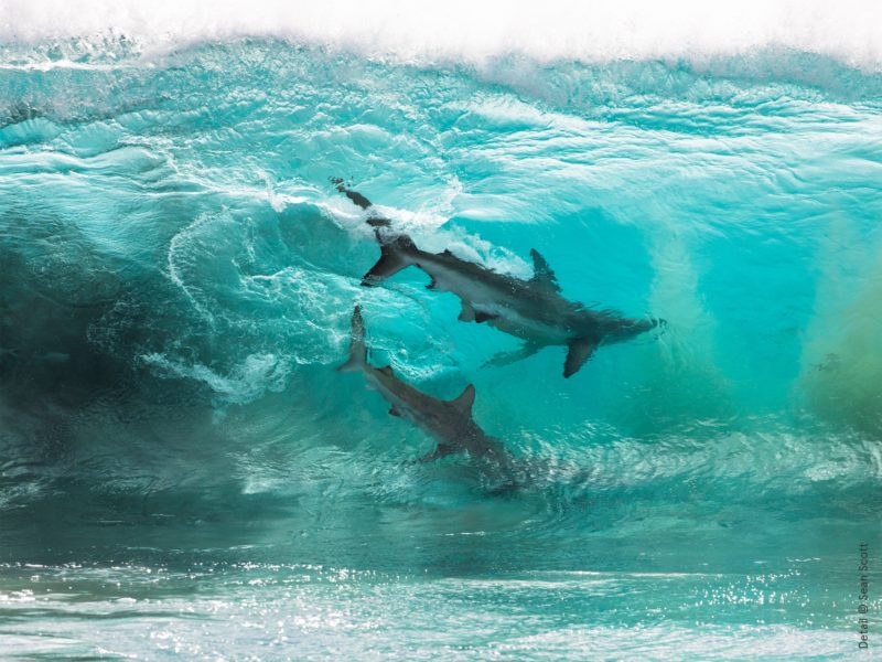 Part of the Australian Geographic Nature Photographer of the Year Australian Museum exhibition