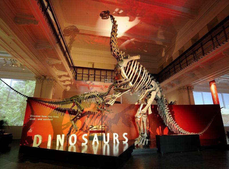 Dinosaur skeletons on display