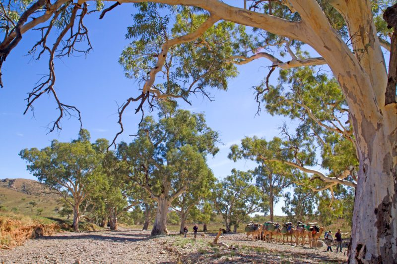 Heysen Trail and Flinders Ranges