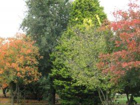 Autumn Trees in Bowral