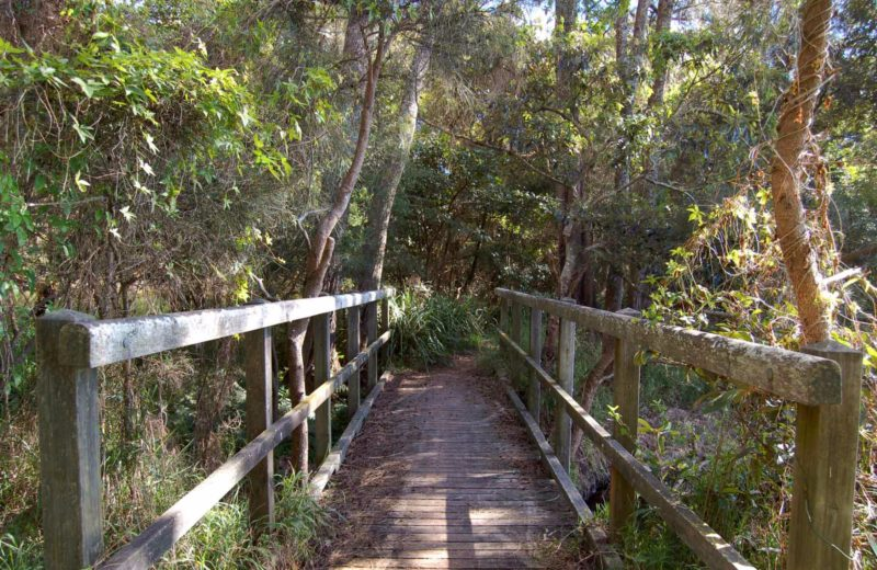 Awaba Foreshore walk, Lake Macquarie State Conservation Area. Photo: Susan Davis/NSW Government